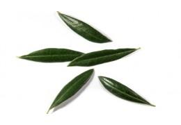 Infusión de hojas de Olivo - Beneficios